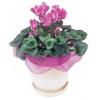 www.flowersofaustralia.com.au