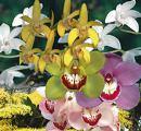 www.gardenexpress.com.au