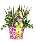 Pink Zebra Garden  from: USD$34.99