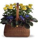 Birthday Flowers - Anniversary Garden To Go Basket Roses, African  from: USD$55.20