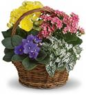 Birthday Flowers - Anniversary Spring Has Sprung Mixed Basket  from: USD$50.95