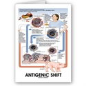 Antigenic Shift (virus Transmission) Card